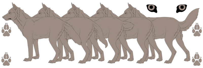 Wolf Template 5 Variations by mistywren