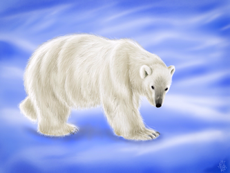 Ursus Maritimus (Polar Bear) by digitalchet