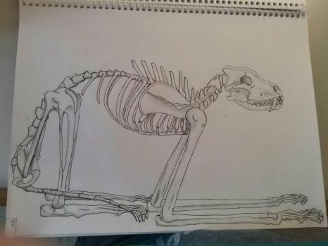 Art Class Assignment: Fictional Skeleton by Erick-the-Druid