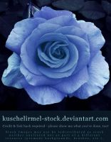 Blue by kuschelirmel-stock