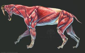Smilodon Populator Muscle Study No Labels by TheDragonofDoom