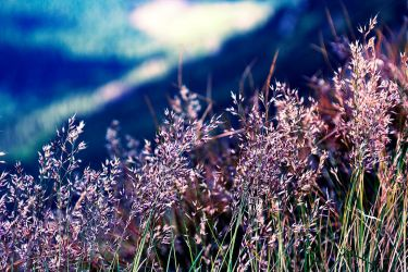 Mountain grass by So-Silly-Rabbit