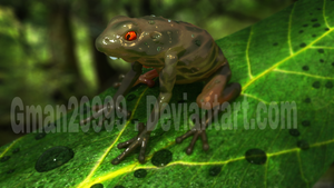 realistic 3D model frog render!!! by Gman20999