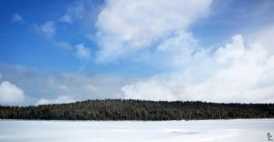 Winterforest line by wellgraphic