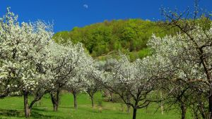 Faget Valley by stefeli-reloaded