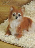 Needle Felted Long Coat Chihuahua by YuliaLeonovich