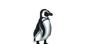 30DDC|Day29|Penguin. by RickWhitetiger