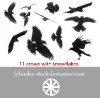 snow crows brushes by amka-stock