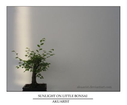 Sunlight on Little Bonsai by akuarist