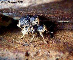 Weevils by BreeSpawn