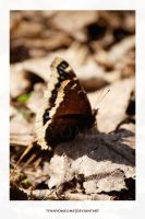 Sepia Butterfly by tennyomelime