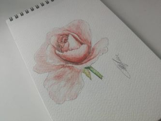 Some roses are rose by Ambremari