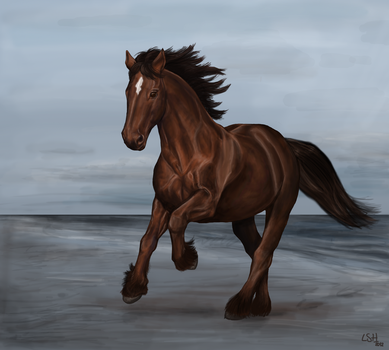 Running on the beach by lizzardhunter
