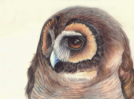 brown wood owl by FeatheredDiva