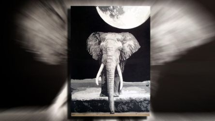 Elephant Multilayer Stencil Art by d-a-m-i-a-n