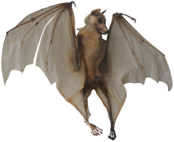 Bat skeleton png by gd08
