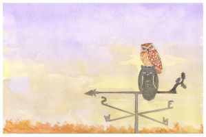 evening owl by onkelscrut