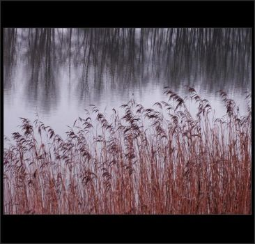 Reeds by CRNEH