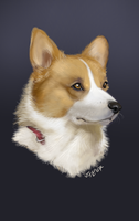 :: Corgi :: by IvyBeth