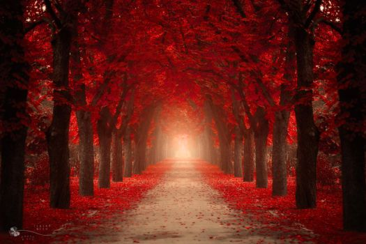 Autumn Passion by ildiko-neer