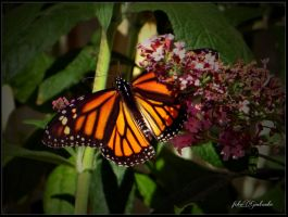 Butterfly and small flowers 2 by gintautegitte69