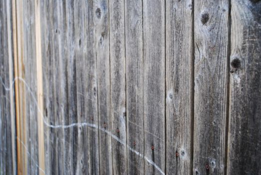 Fence by untrendy