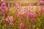 Summer Dreams by MSimpsonPhotos