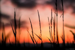 Sunset in the meadow by fti7