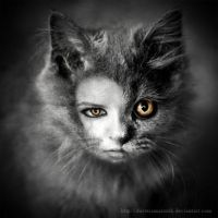 Cats by DusterAmaranth