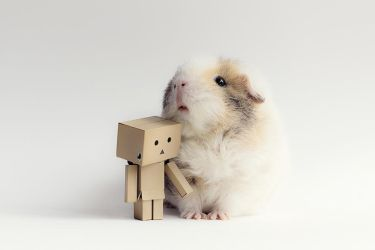 Danbo's new friend by meganjoy