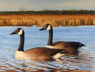 Blackwater Geese by Nambroth
