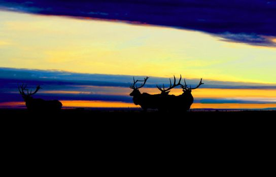 Deer at Dusk by Shyll-j