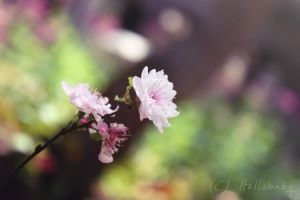 Hello Spring by HBisnt