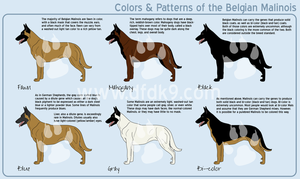 Belgian Malinois Colors by MauserGirl