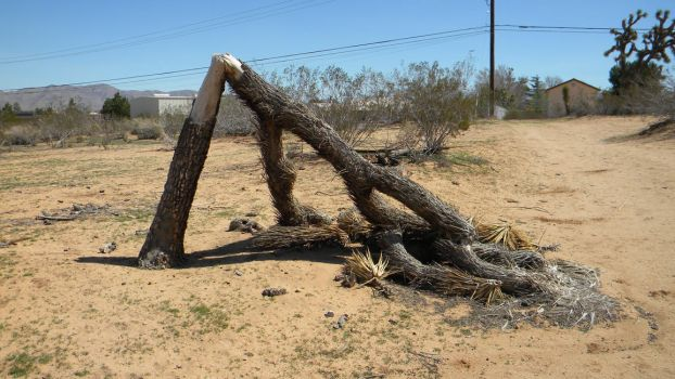 ugly dead tree by Gothicmamas-stock