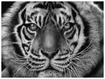 Tiger, tiger by AnOddStore