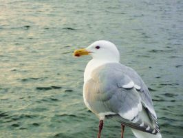 Seagull by TouchedbyLavender