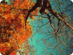 autumn from a tree trunk by allisonxdevine