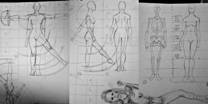 Anatomy sketches 1-5 by Famys
