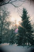 winter light by Selena890