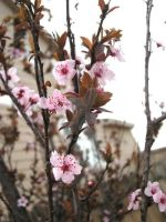 Blossoms After Rain by TheOneiroi