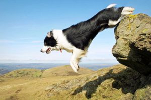 The Leap by micromeg