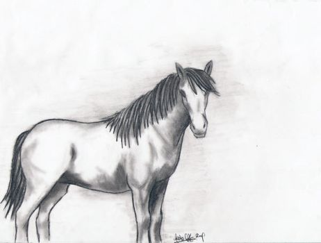 horse. by miy-a