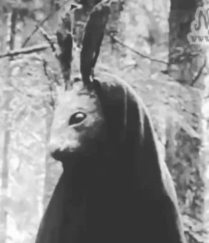 Creepy Rabbit GIF by Nymla