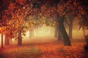 Autumn Dreams I. by realityDream