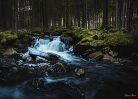 Old Forest by r-maric