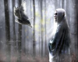 The Winter King by isabelamm
