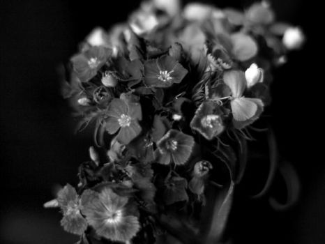flowers b-w series II by 013926