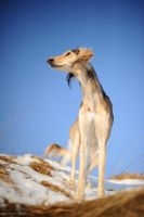 sighthound by Wolfruede