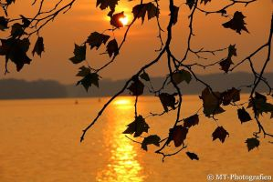 the autumn shows beautiful colors 2 by MT-Photografien